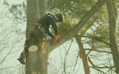 Baumfällung durch Profis
